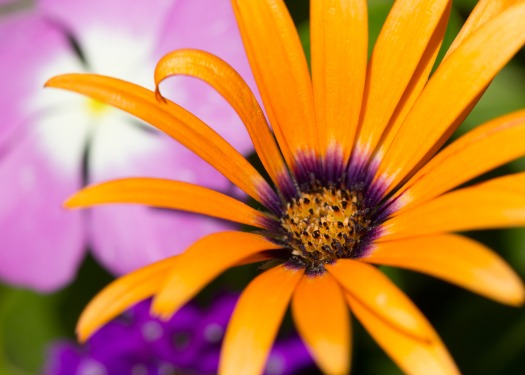 061413-Orange-flower-petals-WEB