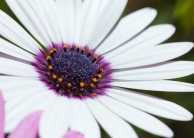 061413-White-flower-macro-WEB