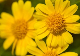 061413-Yellow-flowers-WEB