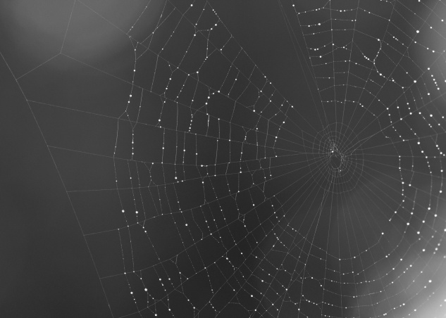 photo spider web water drop black and white