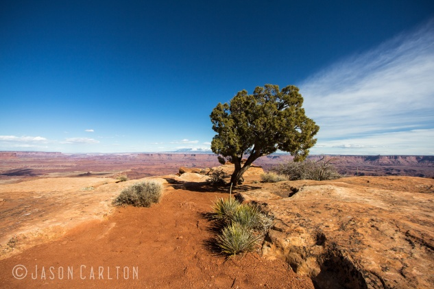Photo Canyonlands National Park lone tree overlook